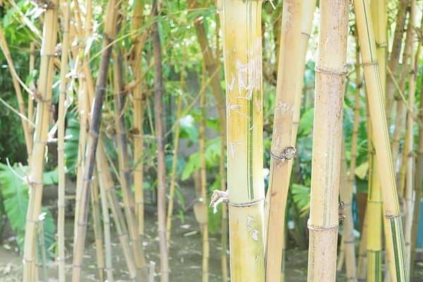 bamboo-garden