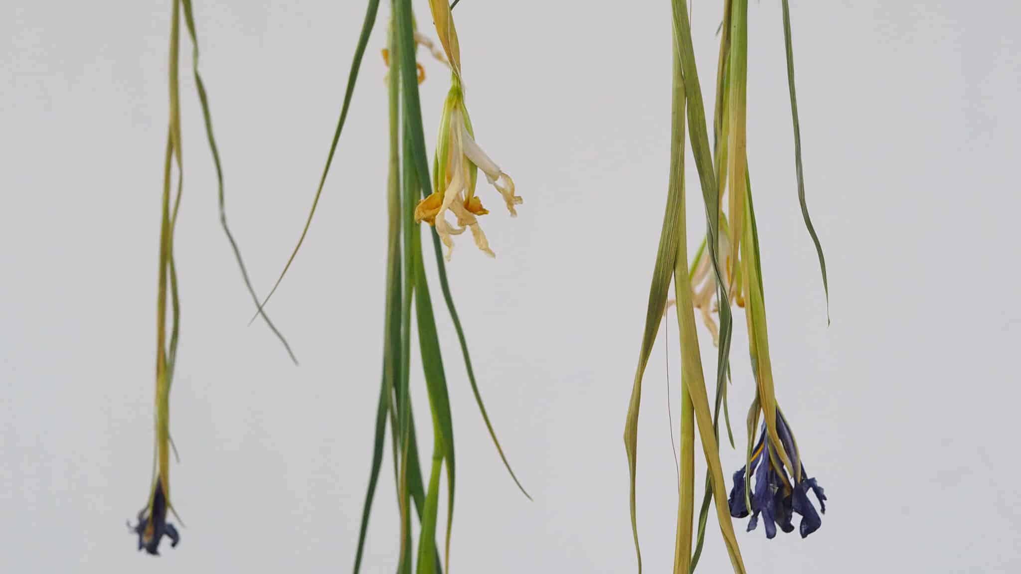 iris-exhibition-greenwich