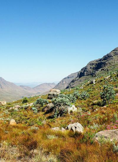 cederberg mountains