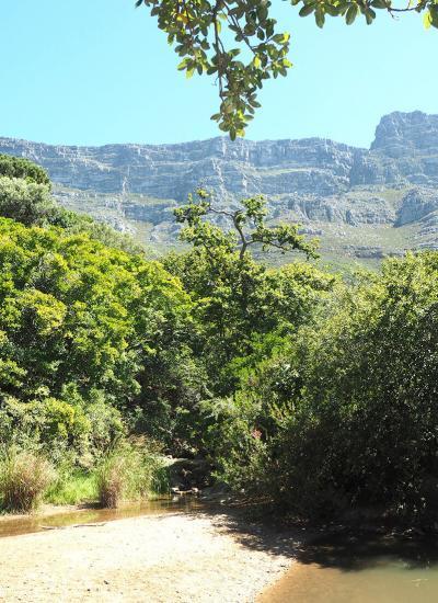 cedeberg greenery