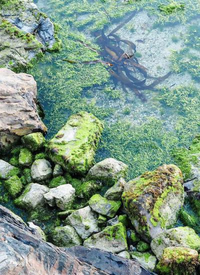sea grass on rocks