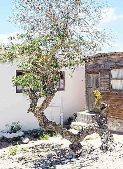 patternoster house