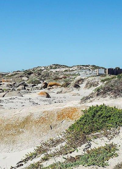 patternoster beach